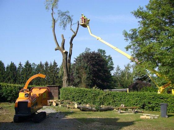Baumfällung und Holzhackmaschine